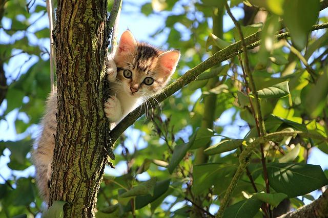 איך תכירו בין החתול החדש לחתול הותיק בבית