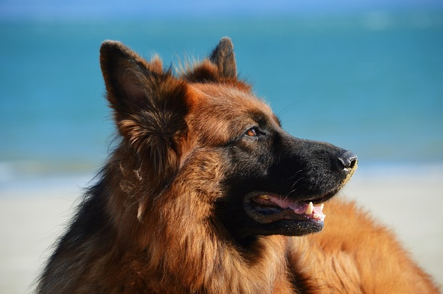 בריאות הכלב
