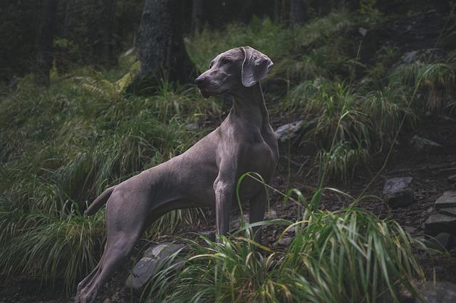 כלב נותן הגנה לבית