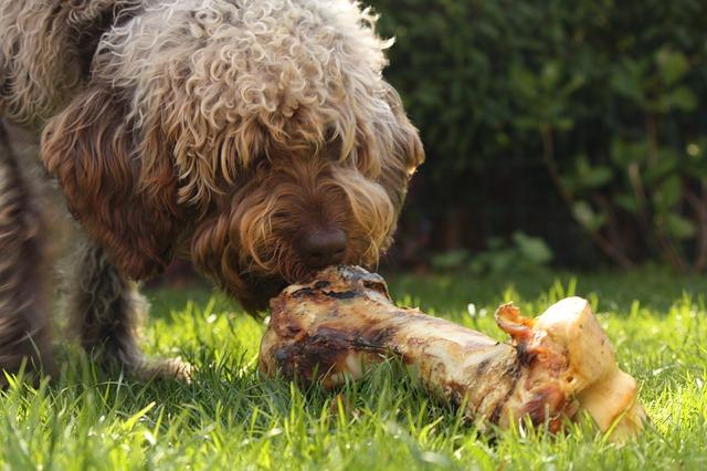 מזון מומלץ לכלבים
